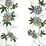 Passiflora Seamless Border Royalty Free Stock Photography