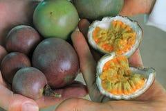 Passiflore comestible de passiflore, Maracuja, passiflore edulis, sur la vigne dans les plantations, près de l'EL Jardin, Antioqu Image stock