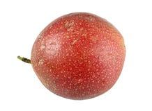 Passiflore comestible de passiflore tropicale organique Images stock