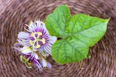 Passiflore fétide, fleur de passiflore comestible de passiflore sur le panier Photographie stock libre de droits