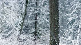 Passing Beautiful Winter Forest With Snow Falling stock video