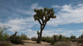 Passing clouds over joshua tree timelapse stock footage