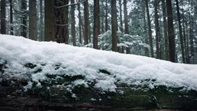 Passing Log Covered In Snow In The Forest. Passing snow-covered log in the woods with snow falling stock video footage