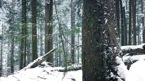 Passing Pretty Forest Tree In The Snow stock footage