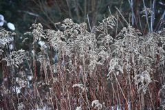 Dull grass in winter against the forest stock photography