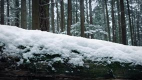 Passing Snow Covered Log In Forest. Passing snow-covered log in the woods with snow falling stock footage