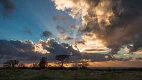 Silhouetted tree with massive storm clouds and sun breaking through royalty free stock image
