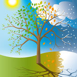Passing of time. A tree and one year of its life stock illustration