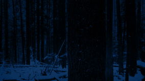 Passing Tree In Snowy Forest At Night. Moving slowly past tree trunk in the dark with snow falling stock video footage