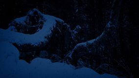 Passing Trees Buried In Snow At Night stock footage
