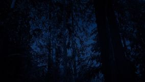 Passing Woodland Trees At Night stock video footage