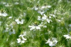 Passion-blommor royaltyfria bilder