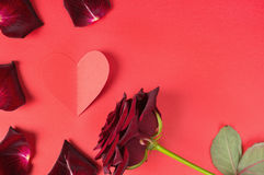 Passion concept for Valentine's day with dark red rose, petals and a paper heart on a red background Stock Image