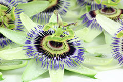 Passion flower. S with the rain still on their petals royalty free stock images