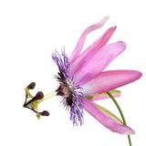 Passion Flower Beauty Stock Photos
