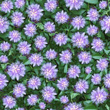 Passion flower seamlessly composable pattern royalty free stock images