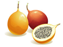 Passion Fruit. Realistic vector illustration of a passion fruit and a half passion fruit vector illustration