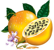 Passion Fruit. High resolution image, made by photoshop and with a lot of details Stock Photos