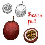 Passion fruit vector sketch exotic fruits icon. Passion fruit fruit color sketch icon. Vector isolated symbol of fresh whole and slice cut exotic tropical vector illustration