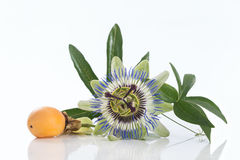 Passion fruit flower with ripe isolated on white background. Passion fruit flower with ripe passion fruit isolated stock photos
