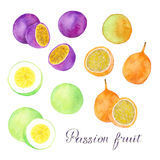 Passion fruit, granadilla or maracuya set. Hand drawn fruits - colorful different maracuyas. Real watercolor drawing. Royalty Free Stock Photography