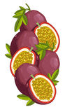 Passion Fruit isolated, Vector, composition. Stock Photo