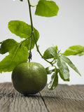 Passion fruit with leaf Stock Photo