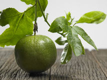 Passion fruit with leaf Royalty Free Stock Photography