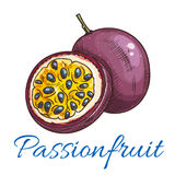 Passion fruit vector color sketch icon Royalty Free Stock Images