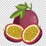 Passion Fruit , Vector. Stock Photo
