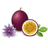 Passion fruit. Vector illustration. Royalty Free Stock Photo