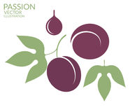 Passion. Fruit. Vector illustration (EPS 10 stock illustration