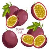 Passion Fruit , Vector. Passion Fruit , Passion Fruit Vector. Passion Fruit on white background. Passion Fruit icon, fruit set. Juicy Passion Fruit. Fruit Royalty Free Stock Photo