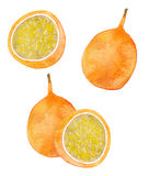 Passion fruit. Watercolor illustration Stock Photography