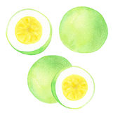 Passion fruit. Watercolor illustration Royalty Free Stock Images