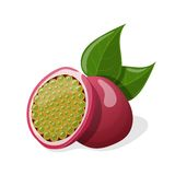 Passion fruits with leafs. Vector illustration Royalty Free Stock Images