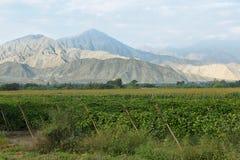 Passion fruits maracuya plantation. In Barranca province, Peru Stock Images