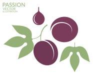 passion Frukt stock illustrationer