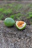 Passion-frukt på ett stenstaket i bönder trädgård, Tenerife, Spanien arkivbilder