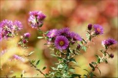Passion pourpre de Wildflower Photographie stock libre de droits