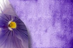 Passion purple background Stock Images