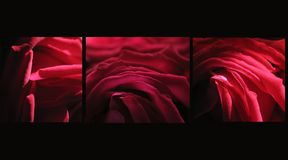 Passion rouge Photo stock