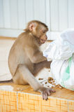 Passionate monkey Stock Images