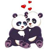 Passionerade pandor Arkivbild