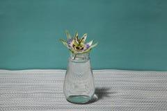 passionflower Стоковое фото RF