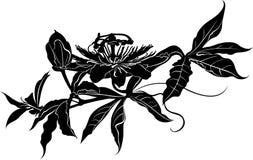 Passionflower. Passiflora passionflower. Passion flower Royalty Free Stock Photos