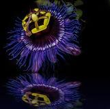 Passionflower zamknięty up Fotografia Stock