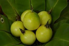 Passionfruit Royalty-vrije Stock Foto