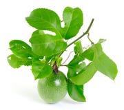Passionfruit på vit bakgrund Royaltyfria Bilder