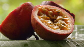 Passionfruit-Rotation stock footage